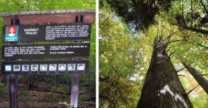 Na Slovensku máme prales, o ktorom mnohí ani netušia. Vstup bez sprievodu tam je zakázaný