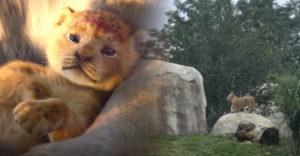 Levíča, ktoré sa stalo modelom pre postavu Simby v remakeu rozprávky Leví kráľ, pochádza zo ZOO