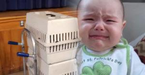 Pane, prečo nosíte to bábätko v klietke? Ľudia na neho často čudne zazerajú