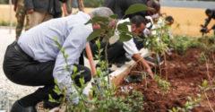 V Etiópii vysadili viac ako 353 miliónov stromov za jediný deň