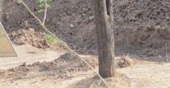 Vidíte na fotke leoparda? Len málokto ho na fotke dokáže rozpoznať